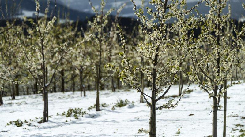Le printemps a fait ses débuts dans le froid et la neige.