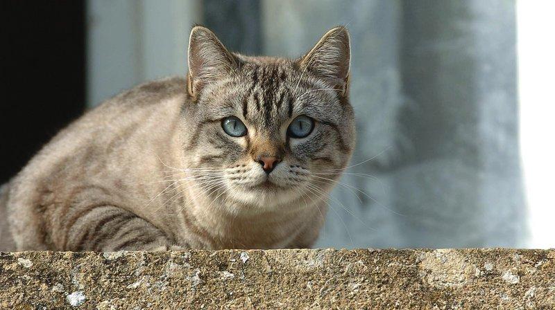Le chat, un parasite?