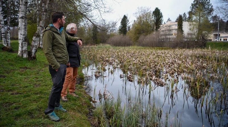La Chaux-de-Fonds: au chevet des crapauds et des tritons de Bonne-Fontaine