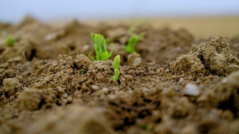 La station servira à expérimenter de nouvelles techniques durables d'agriculture.