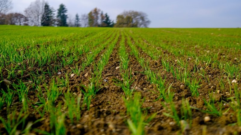 Neuchâtel ne peut pas légalement interdire les pesticides sur son sol
