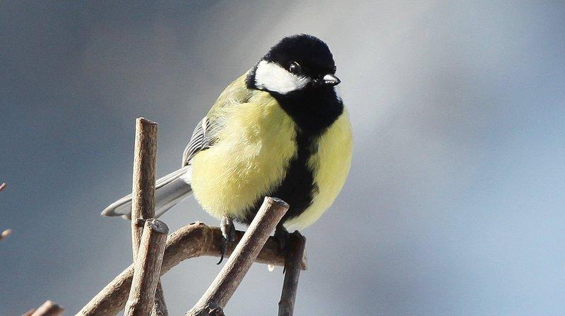 136242 «oiseaux de nos jardins» recensés