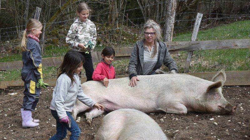 Atelier pédagogique aux Planchettes avec des cochons heureux