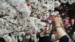 Cerisier en fleurs à Tokyo, restos à Madrid, la Nati à l'entraînement: la galerie photos du 30 mars 2021