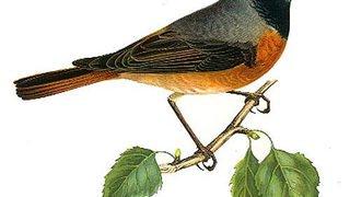Balade au rythme du chant des oiseaux