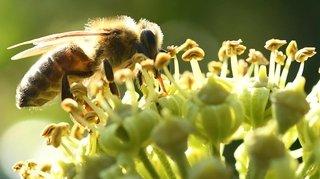 Le 20mai, on fête les abeilles à Neuchâtel