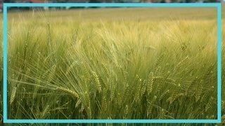 Peut-on se passer des pesticides de synthèse?