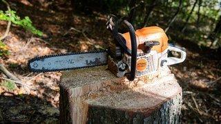 Coupe de bois illégale: l'avocat, le muet et la cour