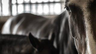 Il n'y aura pas de Marché-Concours national de chevaux à Saignelégier en 2021