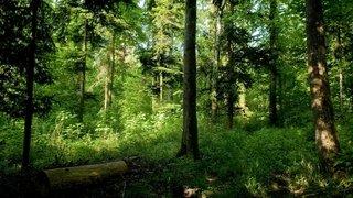 Neuchâtel fêtera la nature fin mai