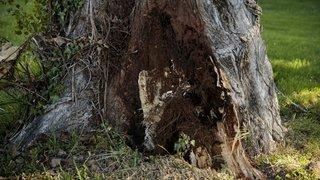 Chaumont: elle s'encastre contre un arbre après un virage