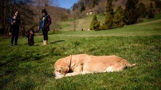 Val-de-Ruz: un paysan dit son ras-le-bol des propriétaires de chiens peu respectueux