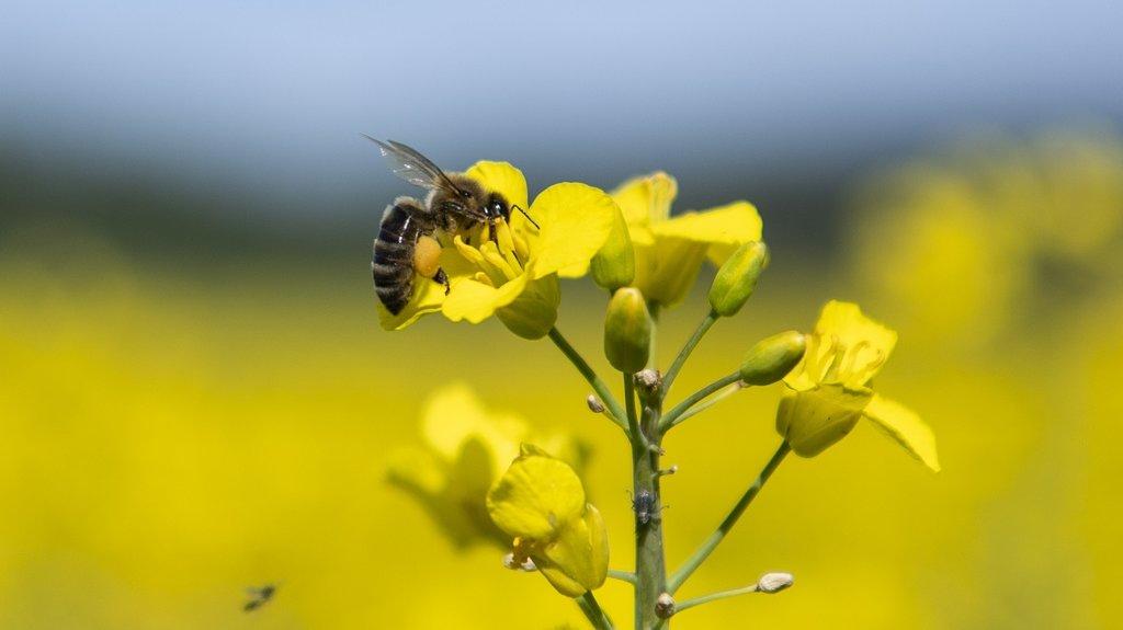 L'emploi excessif d'insecticides et d'autres pesticides est considéré comme une cause importante du recul des insectes, selon l'Académie suisse des sciences naturelles.