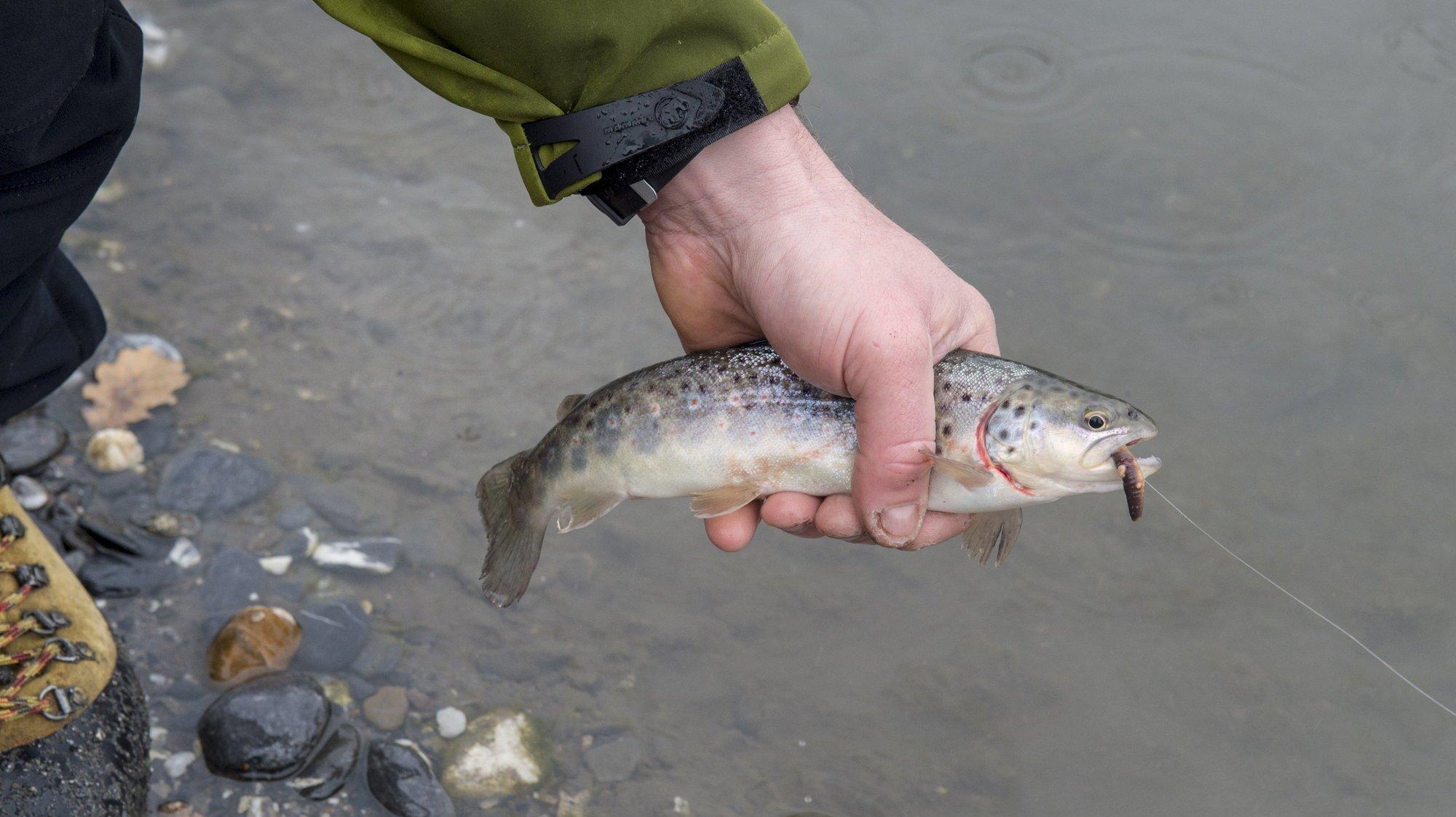 Le travail porte sur des poissons sauvages des cours d'eau des cantons de Neuchâtel, Vaud et Jura, ainsi que du lac de Neuchâtel.