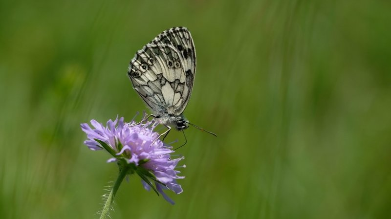Des astuces pour renforcer la biodiversité