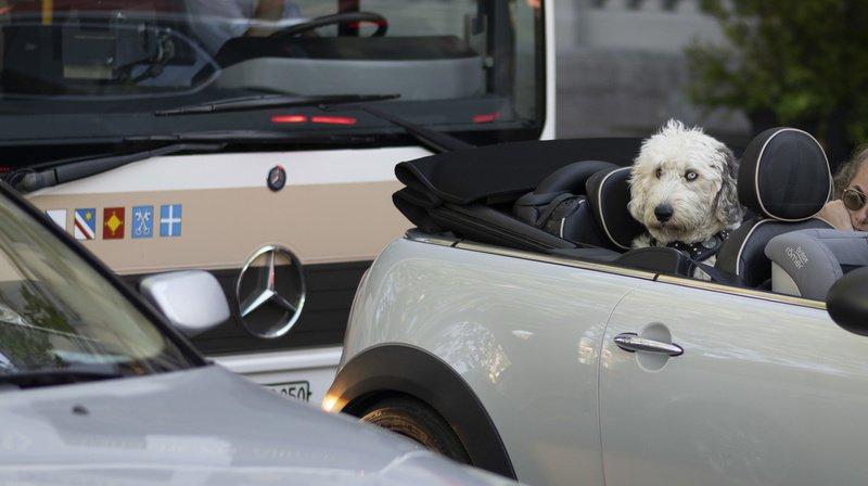 Animaux: voyager avec son animal est soumis à des conditions bien précises