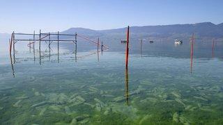 «Aucune raison» de stopper les tirs dans le lac de Neuchâtel, pour l'instant