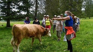 Non, pour échapper à une vache, il ne faut pas courir en zigzag