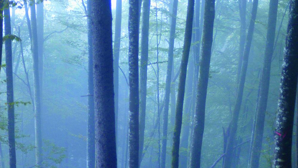 La France va  investir 300 mio d'Euro pour le  reboisement et la modernisation de la filière du bois.