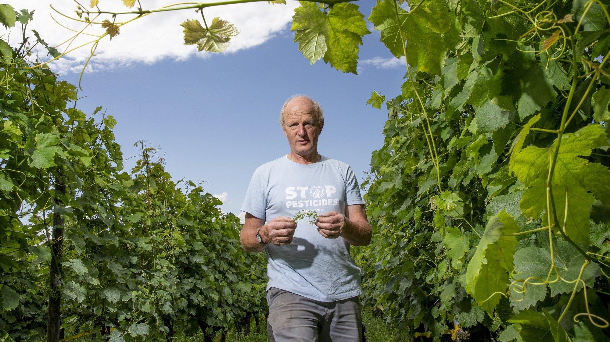 Jean-Denis Perrochet, propriétaire de la Maison Carrée, à Auvernier, examine chaque jour ses  vignes.