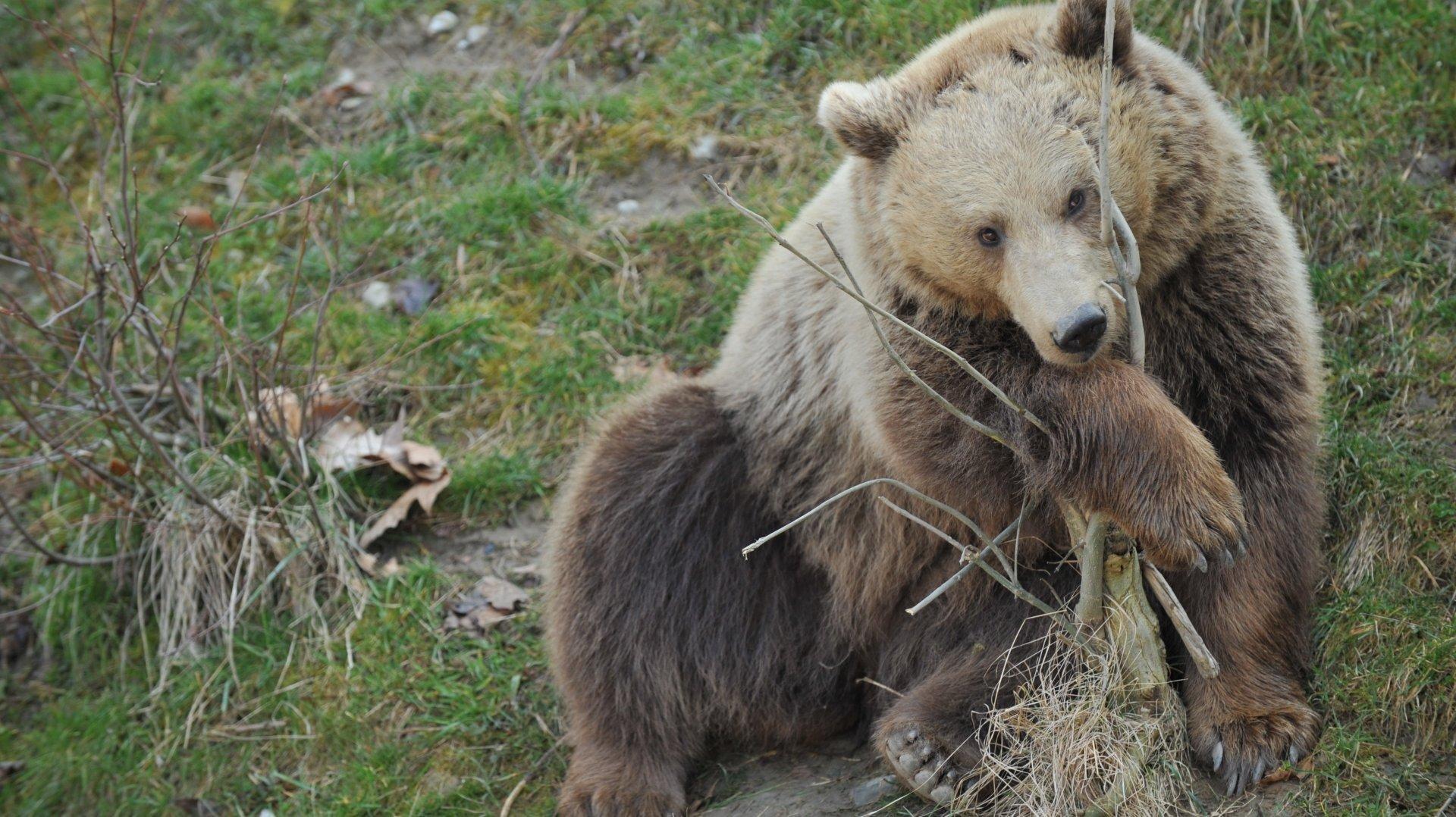 Ursina, née le 16 décembre 2009, est la fille de Björk et de Finn. C'est également en 2009 que le nouveau parc aux ours a vu le jour.