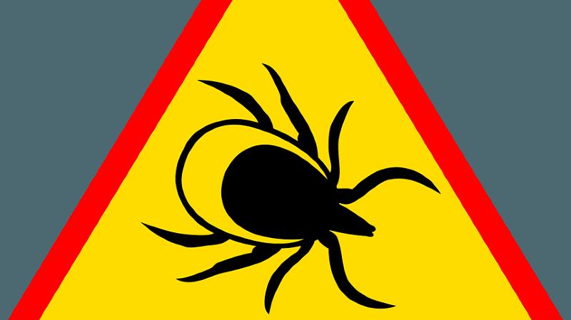 Conférence : Lyme et ses co-infections
