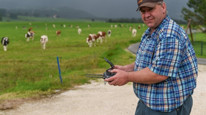 Canton de Neuchâtel: un drone ramène les vaches du Joratel au bercail