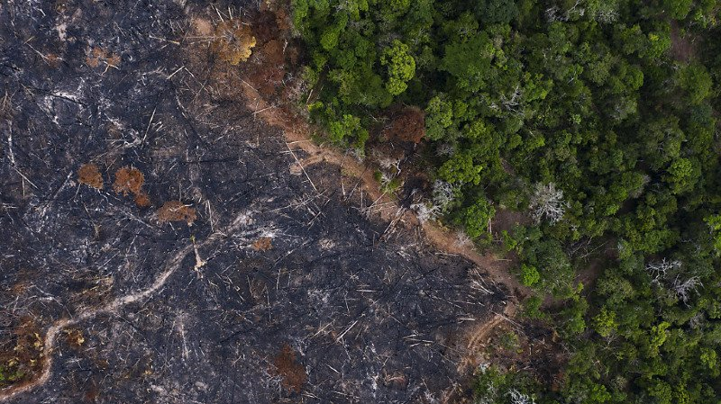 Perte de biodiversité: la BNS et la FINMA sommées d'agir