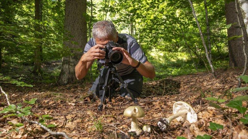 Quel bel été… pour les champignons!
