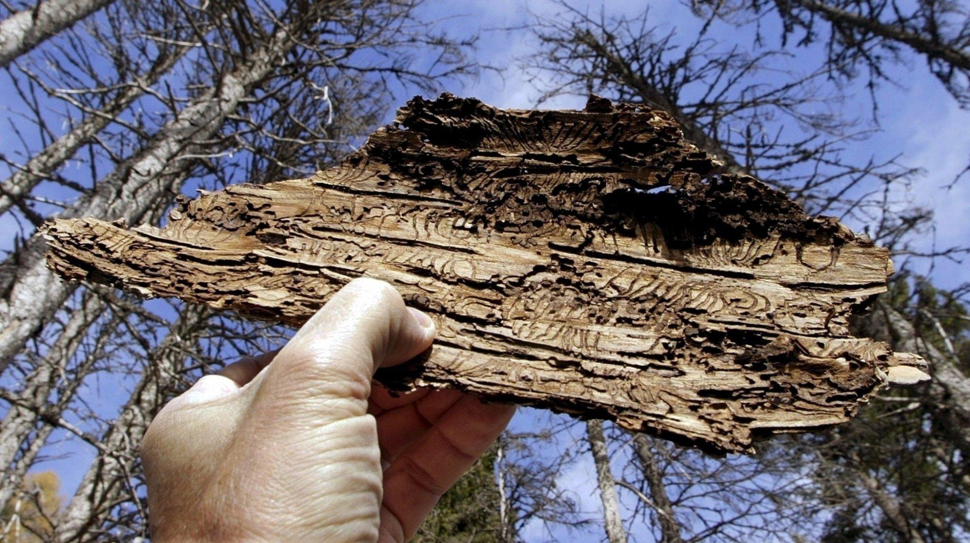 Intempéries: une bonne chose pour les forêts