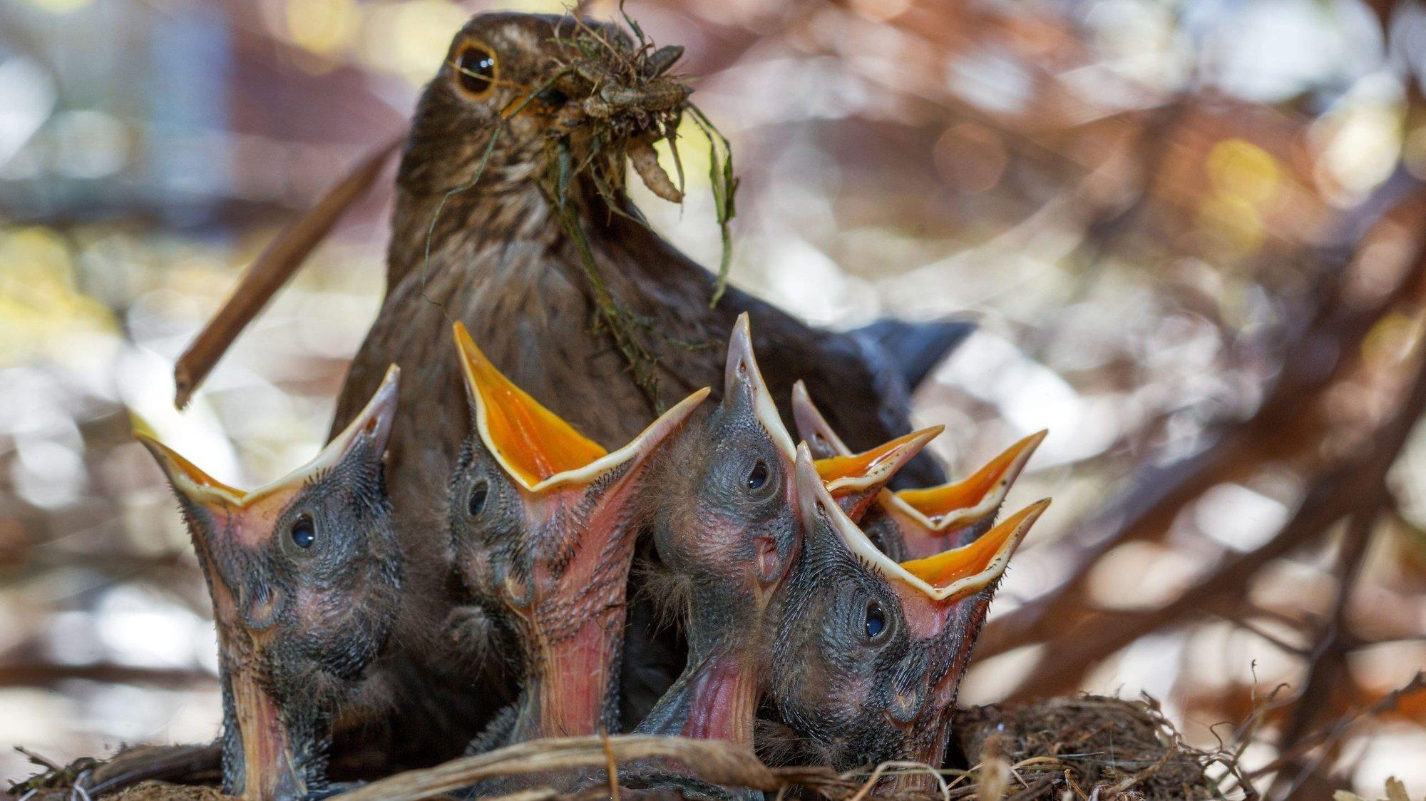 Les animaux du canton de Neuchâtel sont aussi victimes des intempéries