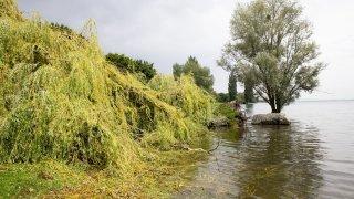 Littoral: les arbres déstabilisés, le nouveau danger après les crues