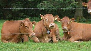 Quand la nature est vache avec les campeurs