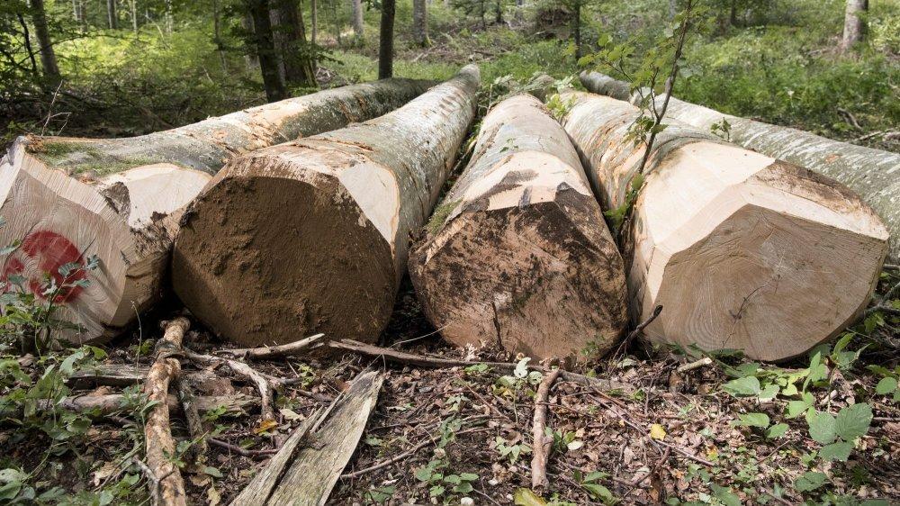 En reprenant le Centre forestier de l'Eter, le Service forestier du Landeron réalisera les travaux d'exploitation et de soins dans les massifs cantonaux de Bois l'Abbé, Trembley, Eter et de Pourtalès.