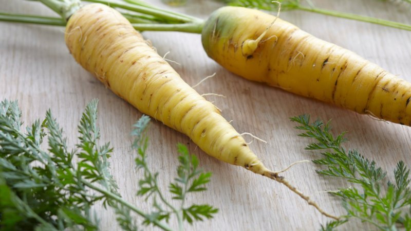 Jura: une journée à la gloire de la carotte jaune du Doubs