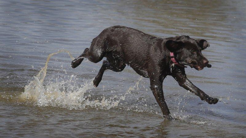 Neuchâtel: des cyanobactéries dans un bassin privé causent la mort d'un chien