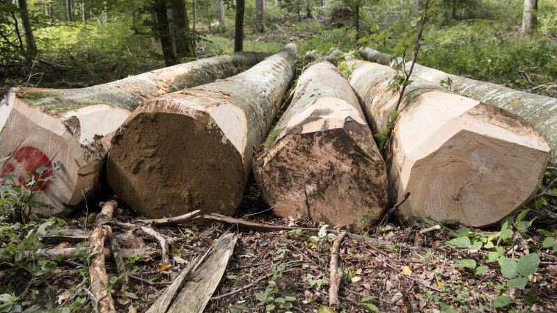 Débat à la tronçonneuse pour la reprise du centre forestier de l'Etat