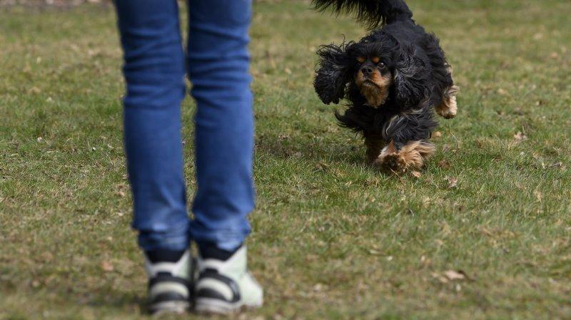 Le Locle: les propriétaires de chiens paieront plus cher