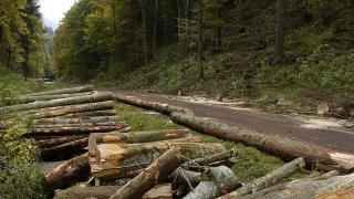 La route des Bugnenets sera fermée en raison de coupes de bois