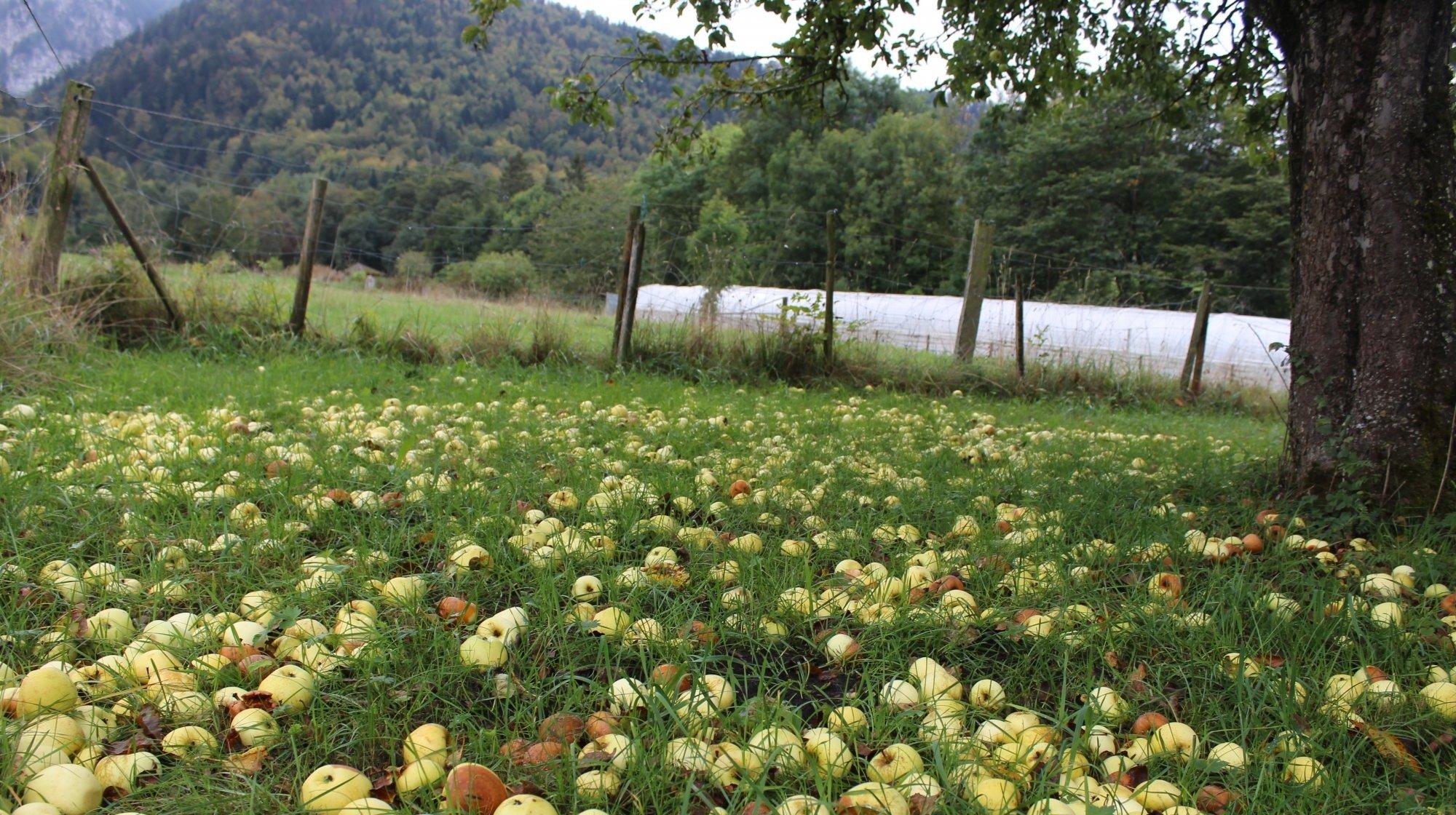 Le Parc Chasseral est à la recherche de pommes