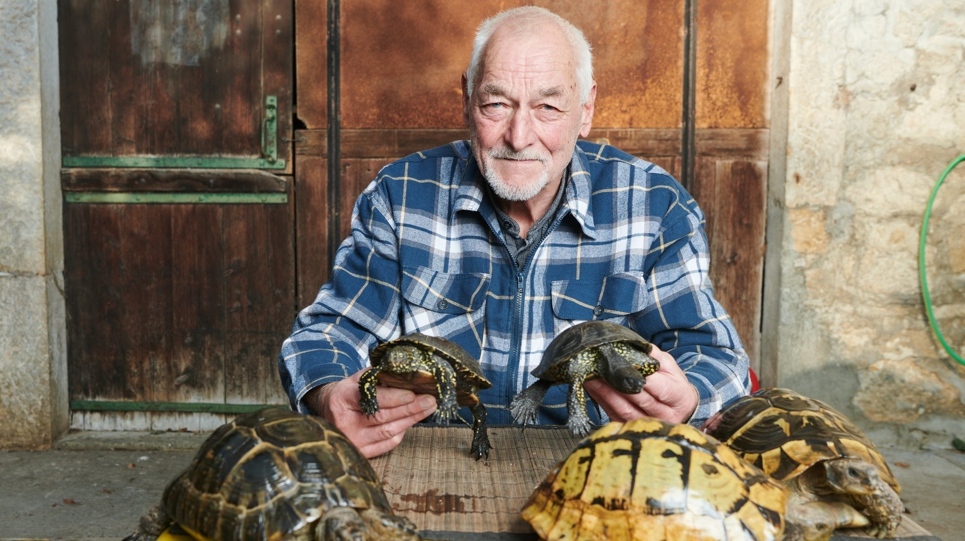 Le Bevaisan Bernard Jacquat et ses tortues.