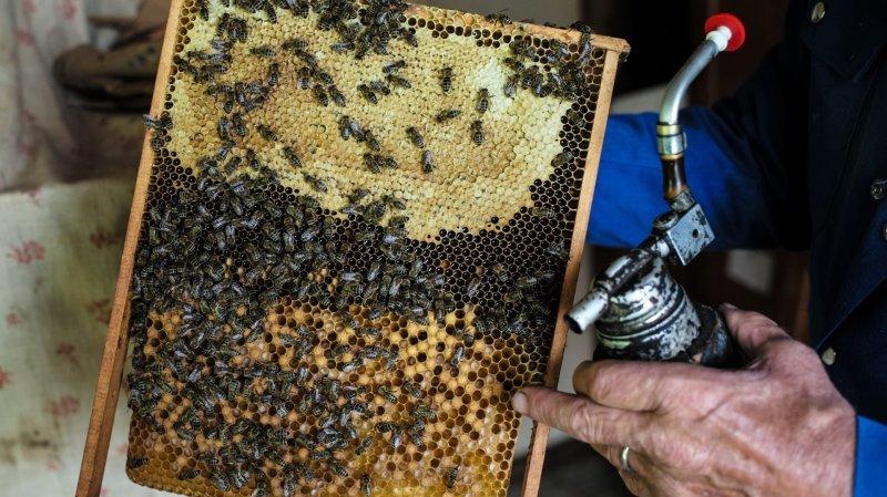 Neuchâtel: l'abeille, un animal domestique comme les autres?