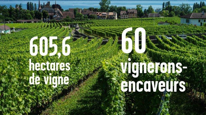 Qui sont les producteurs de vin neuchâtelois?