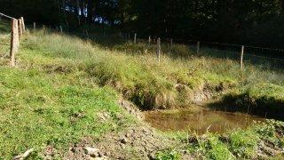 Deux sources revitalisées au Noirmont par le Parc du Doubs
