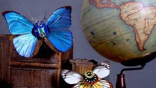 Conférence : sur les ailes du temps-Insect O'clock