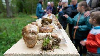 Contrôles, conservation, bons coins: au Locle, les experts en champignons répondent à nos questions