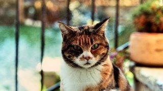 Avec la pandémie, la SPA de Neuchâtel a été inondée de chatons abandonnés