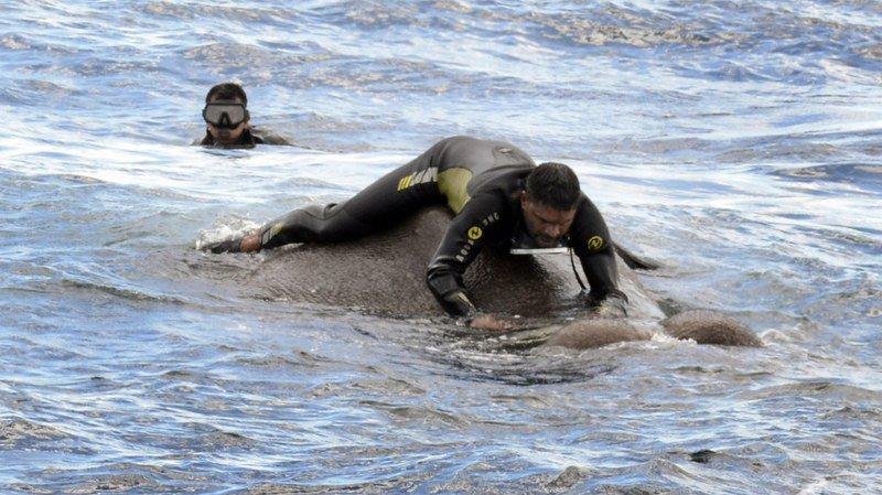 Sri Lanka: deux éléphants sauvés en pleine mer