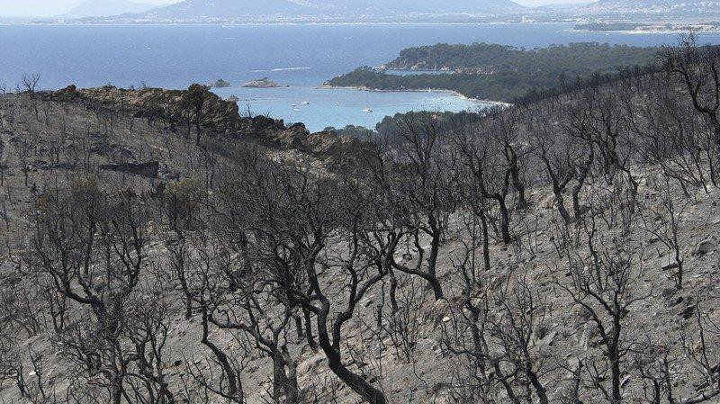 Incendies: les feux en partie contenus en France et au Portugal