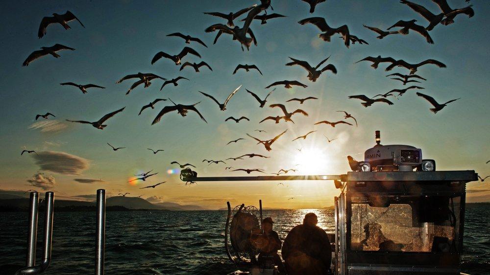 Sur le lac de Neuchâtel, l'horizon s'annonce sombre pour les pêcheurs.